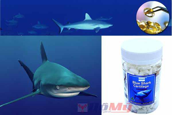 Viên uống shark cartilage có tác dụng gì đối với sức khỏe
